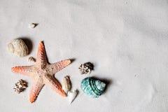 Playa con muchos seashells Imagenes de archivo