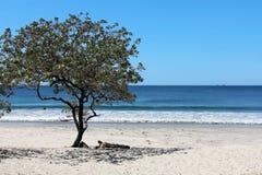 Playa Conchal,哥斯达黎加 免版税库存照片