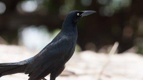 Playa Conchal Birds in Costa Rica Stock Image