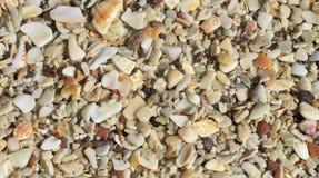 Playa Conchal Shells Stock Photos