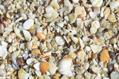 Playa Conchal Shells Background Royalty Free Stock Image