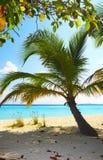 Playa coralina Imágenes de archivo libres de regalías