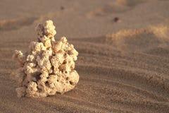Playa coralina blanca de la arena fotos de archivo
