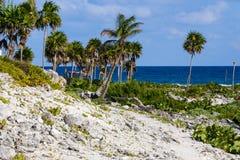 Playa coralina tropical con las palmeras verdes del coco Mar limpio hermoso, océano y cielo azul en el fondo Maya de Riviera, Mex Fotos de archivo libres de regalías