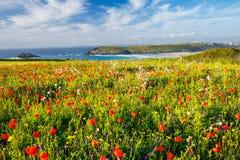 Playa Cornualles de Crantock Imágenes de archivo libres de regalías