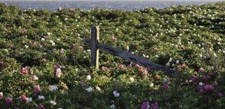 Playa cubierta en flores Foto de archivo