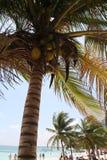 Playa de Akumal Tortuga imagen de archivo