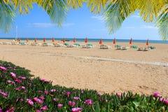 Playa de Albufeira con las flores y las sillas Fotografía de archivo
