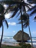 Playa de Barbados con las palmeras y la roca grande foto de archivo libre de regalías
