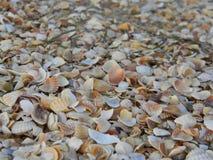 Playa de cáscaras Fotos de archivo libres de regalías