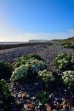 Playa de Coulderton que mira hacia la cabeza de las abejas del st Fotos de archivo libres de regalías