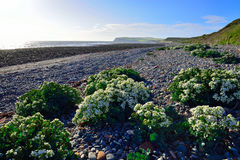 Playa de Coulderton que mira hacia la cabeza de las abejas del st Fotos de archivo