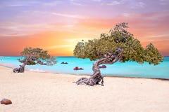 Playa de Eagle en la isla de Aruba en el mar del Caribe Foto de archivo libre de regalías