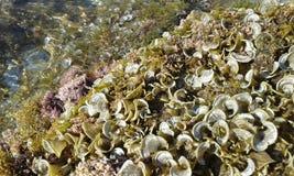 Playa de Fodele - febrero de 2017 Imagen de archivo