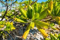 Playa de fuerte Myers foto de archivo libre de regalías