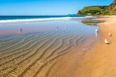 Playa de Garie Fotografía de archivo libre de regalías