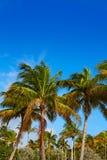 Playa de Island del cantante en el Palm Beach la Florida los E.E.U.U. Imagen de archivo libre de regalías