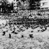 Playa de Juhu Imagen de archivo libre de regalías