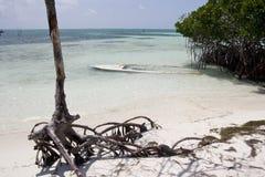 Playa de la arena con el bosque del mangle, calafate de Caye fotografía de archivo libre de regalías