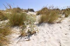 Playa de la arena, mar Mediterráneo Fotografía de archivo libre de regalías