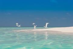 Pájaros de la playa Foto de archivo libre de regalías