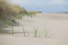 Playa de la arena y reed.GN imagen de archivo