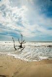 Playa de la bahía de la botánica Imagenes de archivo