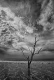 Playa de la bahía de la botánica Fotos de archivo libres de regalías