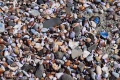Playa de la cubierta de las conchas marinas Foto de archivo