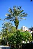 Playa de la Florida St Petersburg: palmera Imagenes de archivo