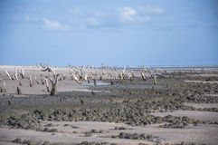 Playa de la isla del mar Fotografía de archivo libre de regalías