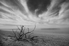Playa de la mañana blanco y negro Foto de archivo libre de regalías