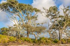 Playa de la madera de deriva, isla Georgia de Jekyll Fotos de archivo libres de regalías