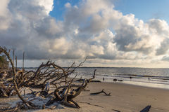 Playa de la madera de deriva, isla Georgia de Jekyll Imagenes de archivo