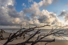 Playa de la madera de deriva, isla Georgia de Jekyll Imagen de archivo libre de regalías