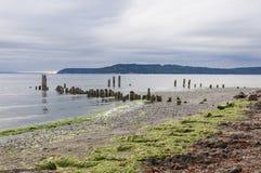 Playa de la madera y de la alga marina Fotos de archivo libres de regalías