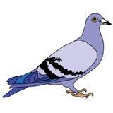 Playa de la naturaleza del ejemplo del diseño de la historieta del icono de la bestia de las aves de corral del pájaro de la palo Fotos de archivo libres de regalías