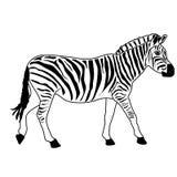 Playa de la naturaleza del ejemplo del diseño de la historieta del icono de la bestia del caballo de la cebra Imagen de archivo