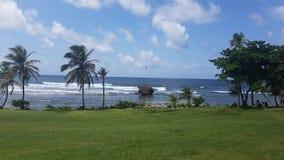 Playa de la palmera Fotos de archivo