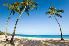 Playa de la palmera Foto de archivo libre de regalías