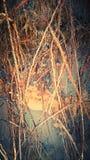 Playa de la raíz Imagenes de archivo