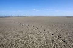 Playa de Langeoog Fotos de archivo libres de regalías