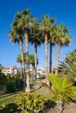 Playa de las Americas. Tenerife Royalty Free Stock Images