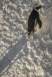 Playa de los pingüinos en Ciudad del Cabo foto de archivo