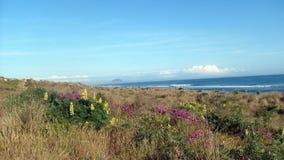 Playa de Papamoa Fotos de archivo