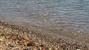 Playa de Picton, Nueva Zelanda almacen de video