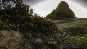 Playa de Piha, NZ Foto de archivo