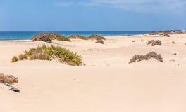 Playa de Sandy cerca de la ciudad de Corralejo Fotografía de archivo