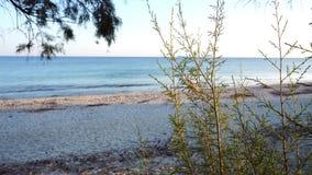 Playa de Sandy con el árbol de pino en primero plano