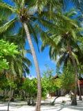 Playa de Sandy con las palmas de Maldives Fotos de archivo libres de regalías